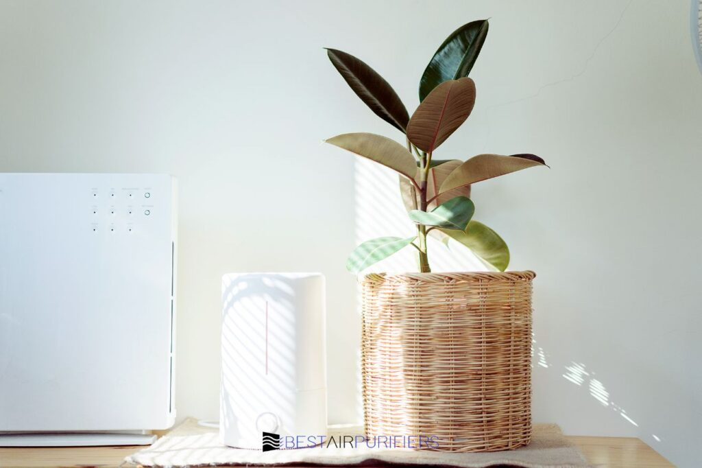 Do Air Purifiers Help With Nasal Congestion