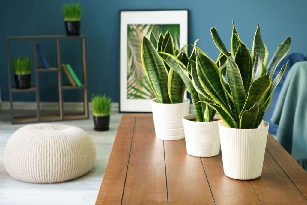 Does A Higher Number Of House Plants Mean Cleaner Air