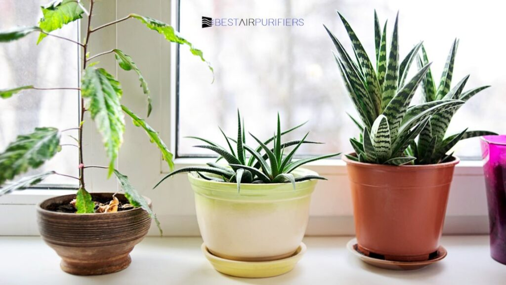 How Much Do House Plants Actually Purify The Air