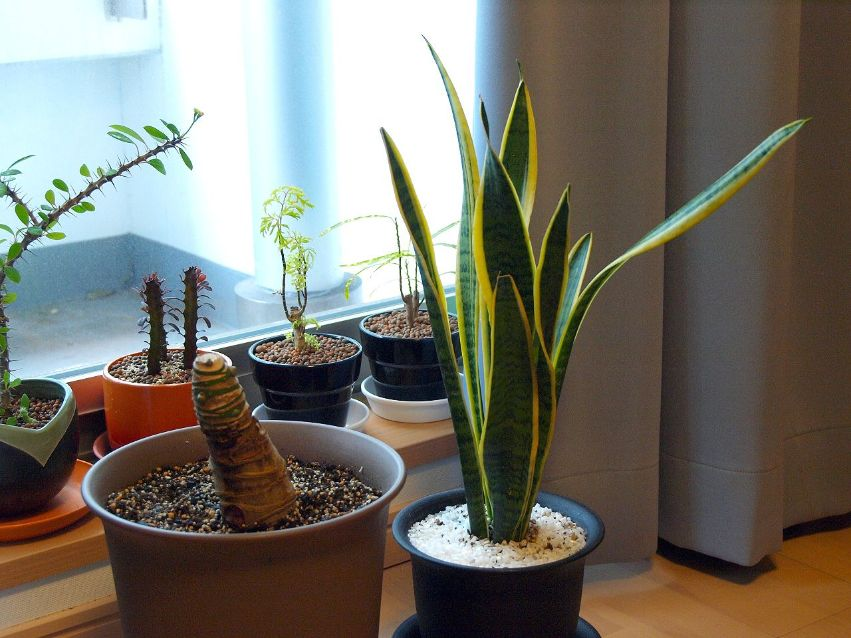 What Benefits Can Plants Have On Air Quality & Our Home