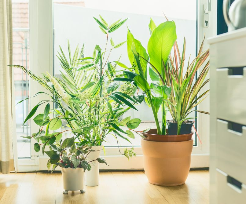 Will Indoor Plants Purify The Air Inside My Home